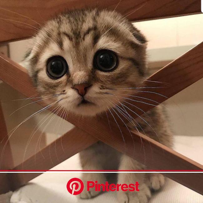 @山田優 : さぁーて。 今日も頑張りますか‼️ #cityofangels #シティオブエンジェルズ #稽古 #この写真に癒される #可愛すぎやろー... - 卖萌 | キュートな猫, 子猫, かわいい子猫